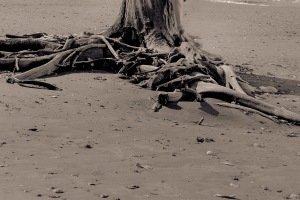 fine art nude in the landscape - limited edition archival photography